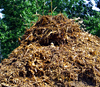Tree Branch Mulch.jpg